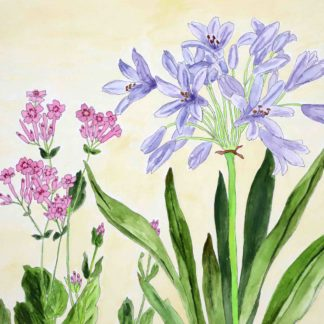 tanigami konan, agaranthus and catchfly in watercolor
