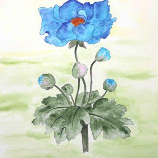 Blazing star gallery_Behnaz Rezwani_Himalayan Blue Poppy in watercolor